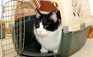 cat-moving-carrier-1